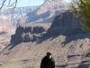 Grand Canyon Condors