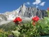 Chamonix France tours